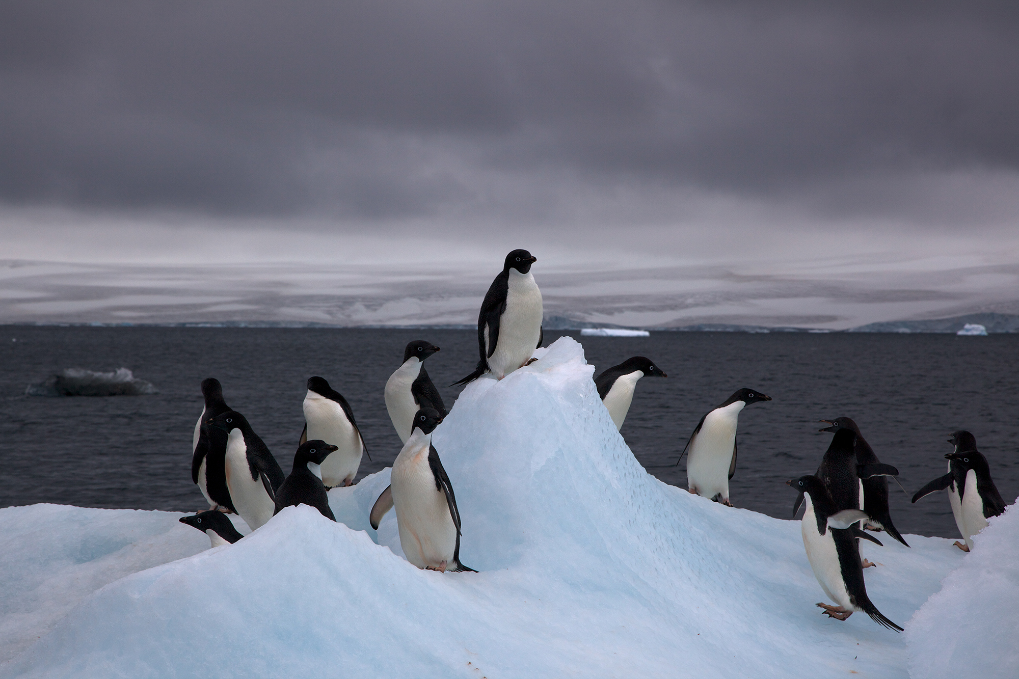 Research team helps discover massive Antarctic penguin colony