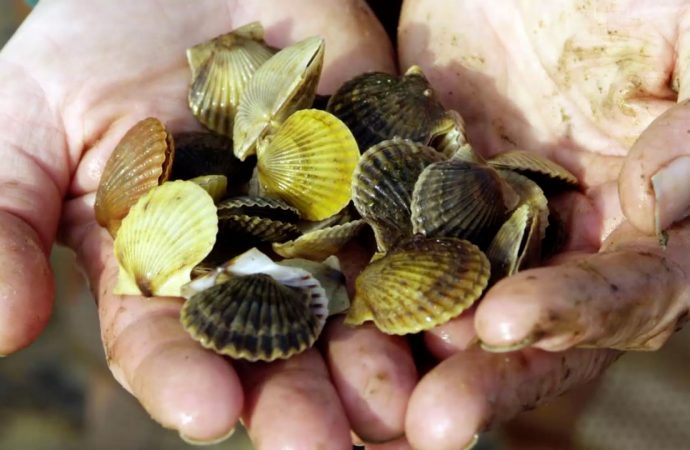 Seawolves Storm or Not Special – Peconic Bay Scallops